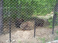 Парка за танцуващи мечки - гр.Белица