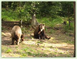 Танцуващи мечки